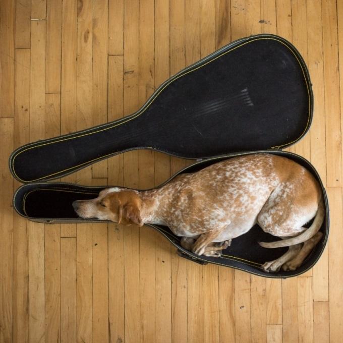 Это Мэдди. Они любит спать в гитарном футляре.