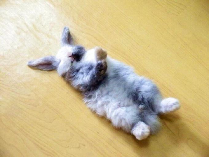 Спи мой зайчик.