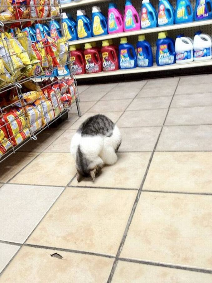 Поход по магазинам – это так утомительно. Лучше поспать.