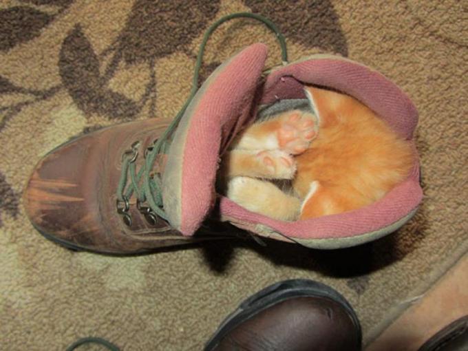 Главное – найти удобное место для сна.