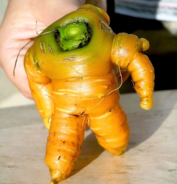 Морковка идет в тренажерный зал.