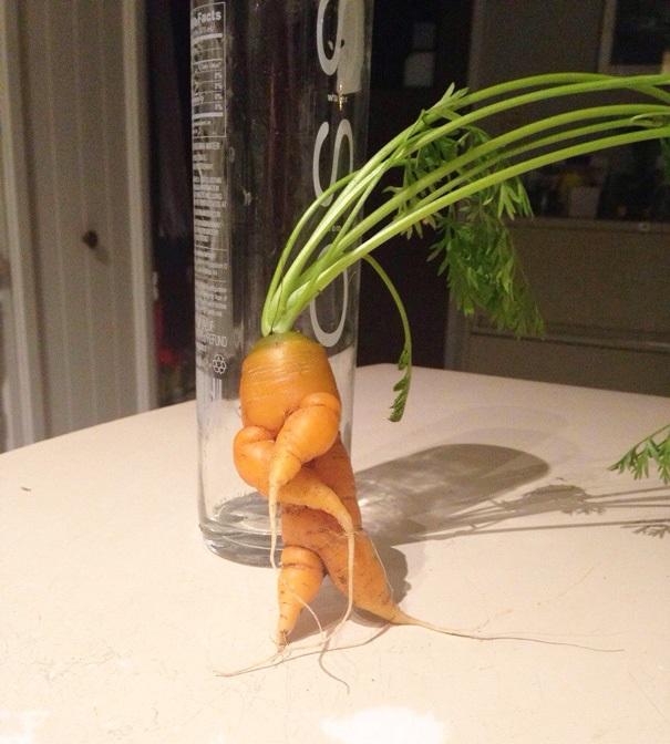 Морковка на тусовке.