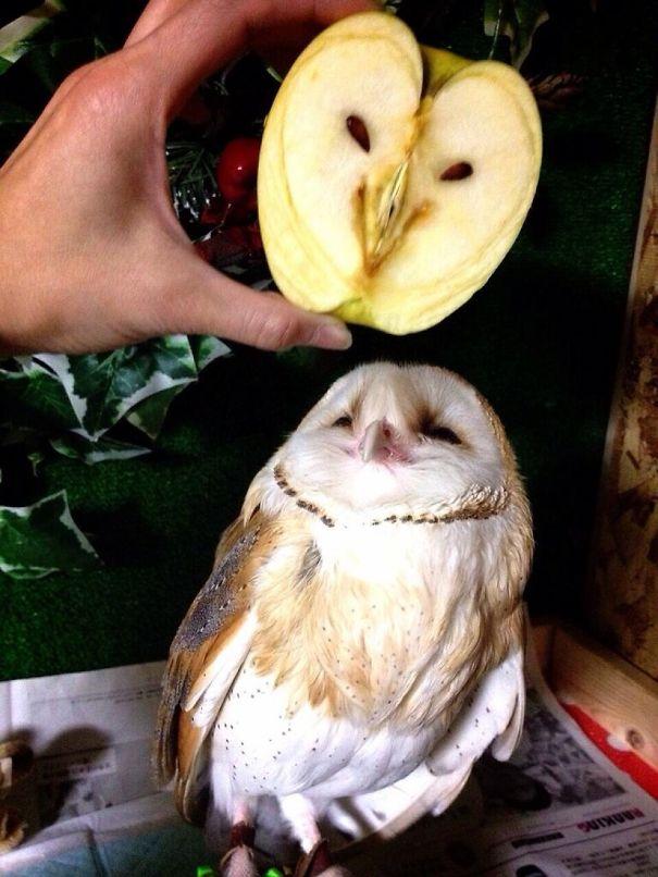 Яблоко породы совьих.