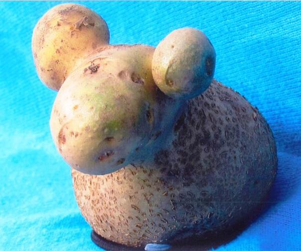 Картошка явно смахивает на овечку.