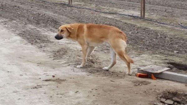 pes-odinoko-stoyal-u-obochiny-2