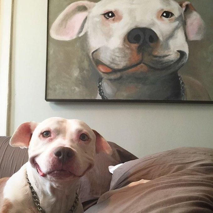 собака улыбается-1