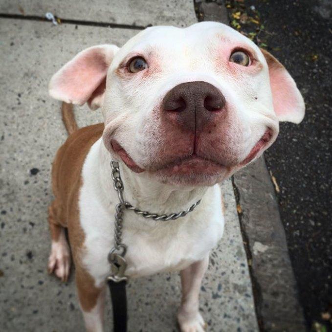 собака улыбается-2