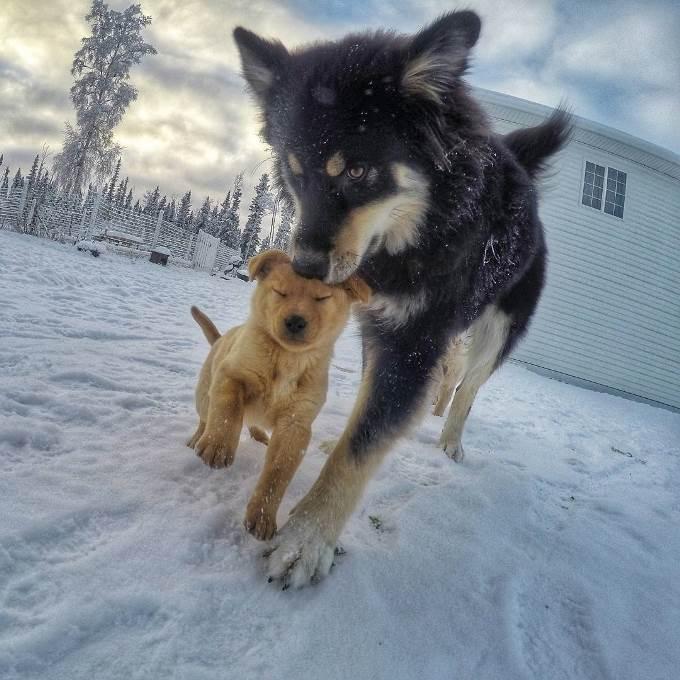 tim-dogs-13