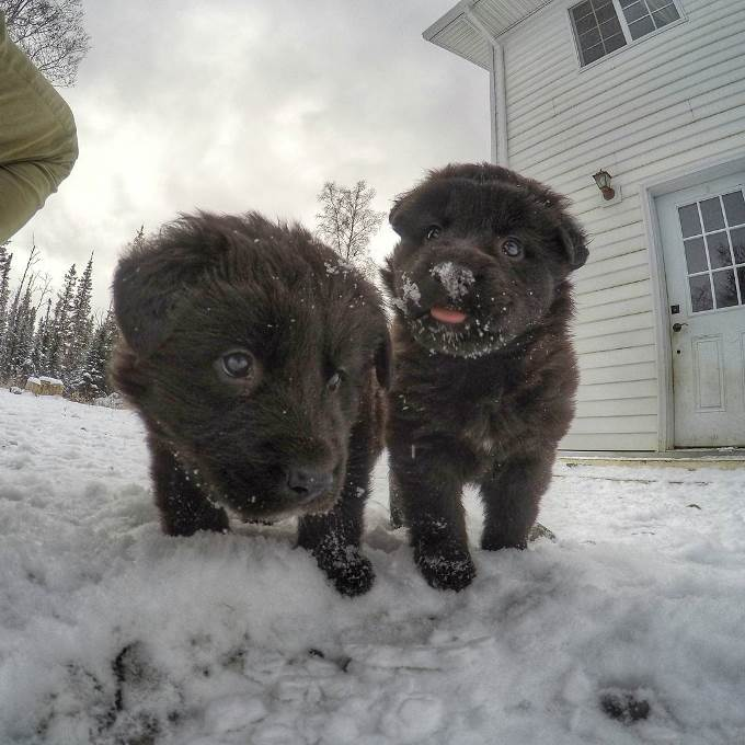 tim-dogs-5