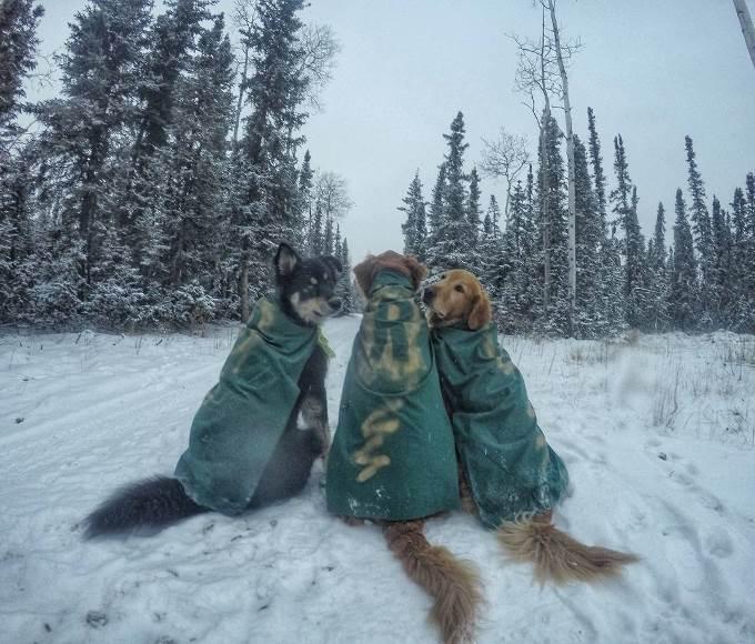 tim-dogs-6
