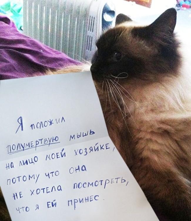 15-prichin-ponyat-i-prostit-kota-3