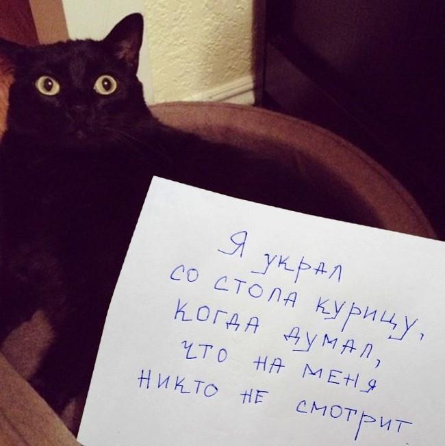 15-prichin-ponyat-i-prostit-kota-5