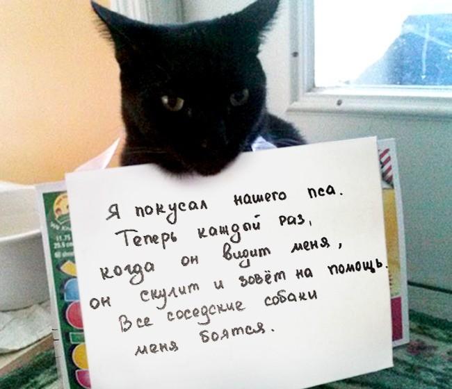 15-prichin-ponyat-i-prostit-kota-7