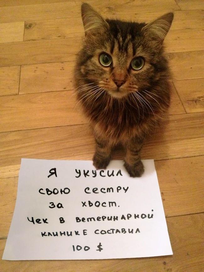 15-prichin-ponyat-i-prostit-kota-9