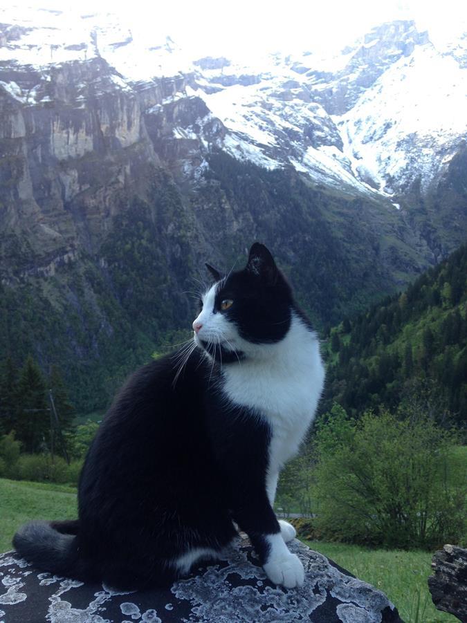 v-shvejcarskih-alpah-zamechen-kotspasatel-1