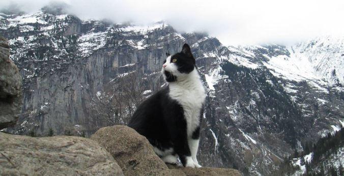 v-shvejcarskih-alpah-zamechen-kotspasatel