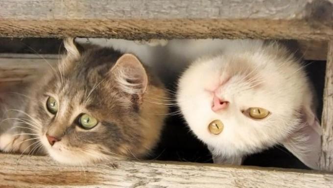 lubopytnye-koty-15