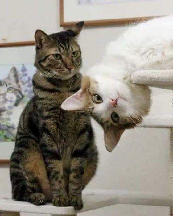 lubopytnye-koty-16