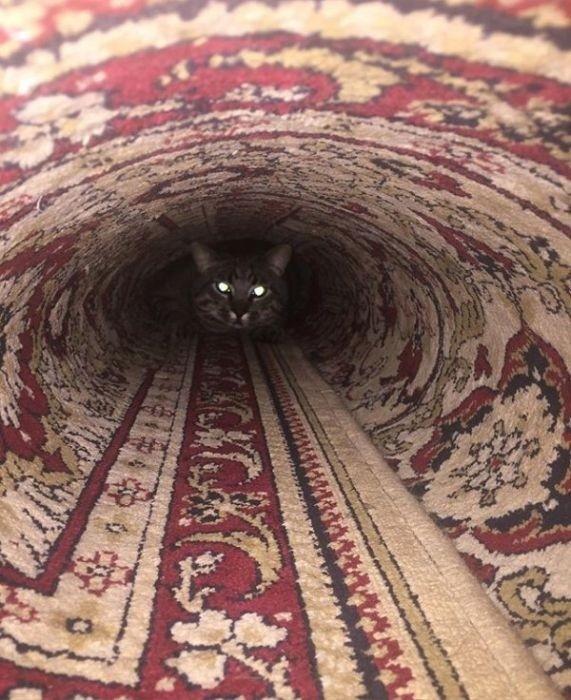 lubopytnye-koty-2