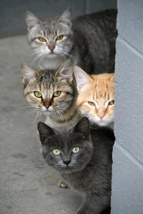lubopytnye-koty-24