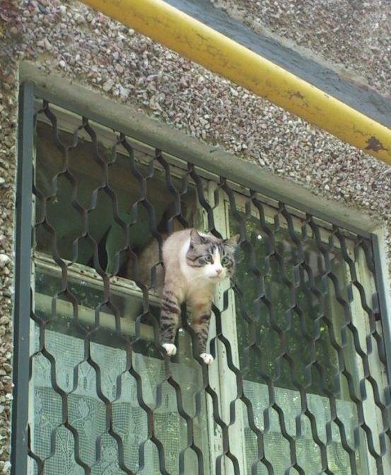 lubopytnye-koty-5