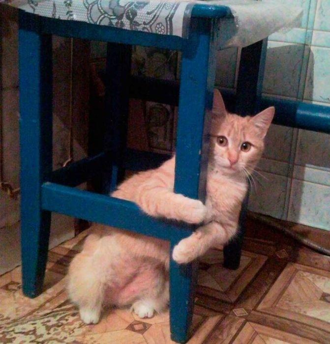 lubopytnye-koty-8