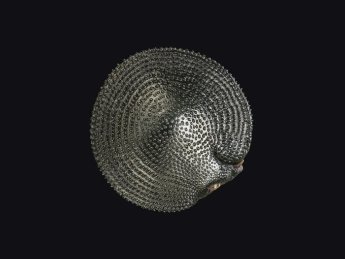 luchshie-foto-goda-iz-pod-microscopa-13