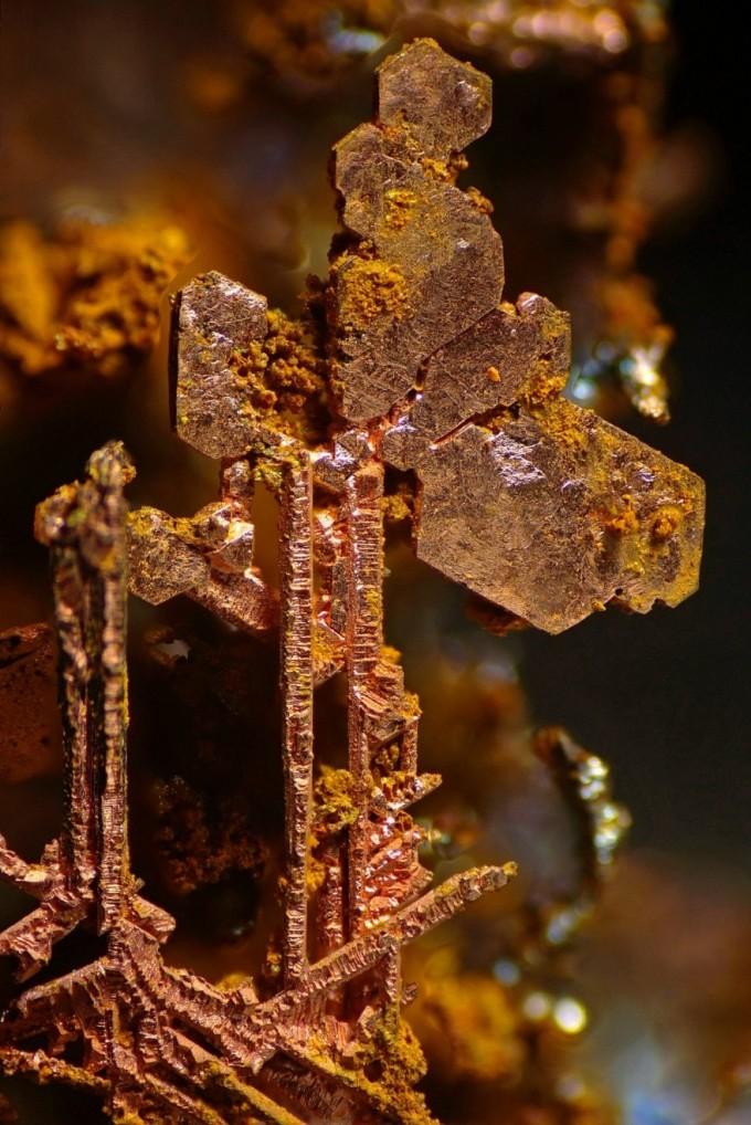 luchshie-foto-goda-iz-pod-microscopa-4