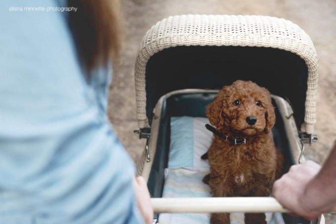 Эта идея пришла фотографу Элише (Elisha Minnette), когда она вместе с ребятами забирала щенка от заводчика.