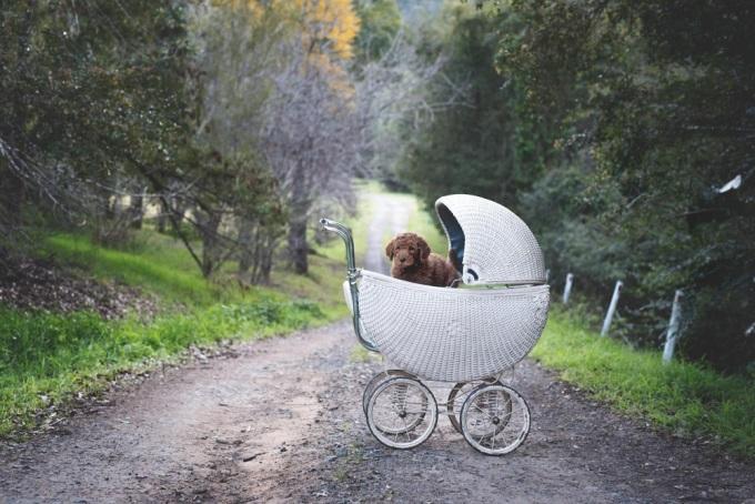 Во время фотосессии парочка делала все то же самое, что делают молодые родители, фотографируясь со своим новорожденным малышом.