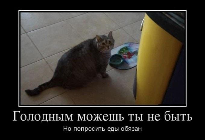 demotivatory-na-zlobu-dnya-7-min