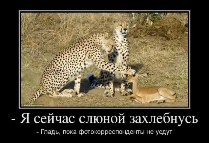 demotivatory-na-zlobu-dnya-8-min
